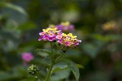 花,桃红色花,领域背景,花背景的领域 库存照片