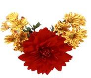 花,红色和黄色花美丽的花束在玉米的 库存照片