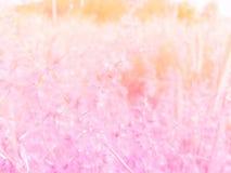 花,美好,美好的颜色,草花,背景,五颜六色 免版税图库摄影
