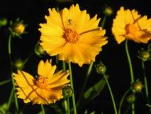 花,自然,庭院,领域,户外,瓣,秀丽,美丽,白色,黄色 免版税库存图片