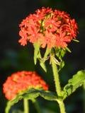 花,自然,庭院,领域,户外,瓣,秀丽,美丽,白色,黄色 免版税图库摄影