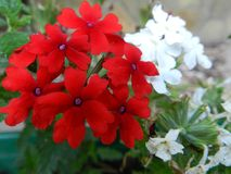 花,自然,庭院,领域,户外,瓣,秀丽,美丽,白色,黄色 库存照片