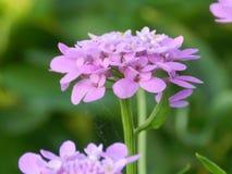 花,自然,庭院,领域,户外,瓣,秀丽,美丽,白色,黄色 免版税库存照片