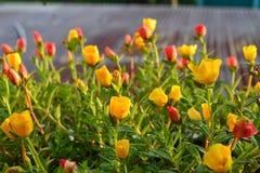 花,自然,黄色花,美丽的花 库存图片