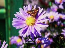 花,蜂,紫色,闻了,蝴蝶 图库摄影
