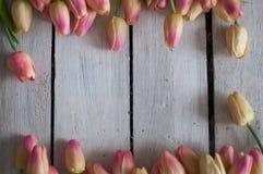 花,郁金香,背景,白色,木,轻的背景,美丽的花 免版税库存照片