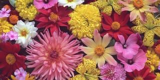 花,顶视图 招呼或明信片的花卉背景 免版税库存图片