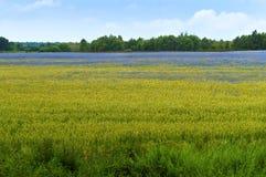 花,领域,草甸,雏菊,蒲公英,草,牧场地,杂草 图库摄影