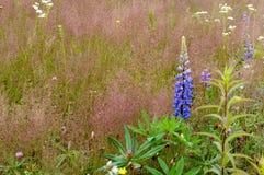 花,领域,草甸,雏菊,蒲公英,草,牧场地,杂草 免版税库存照片