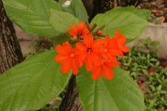 花,颜色花在春天 免版税库存图片