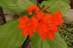 花,颜色花在春天 库存照片
