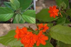 花,颜色花在春天 库存图片