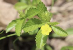 花,黄色,外面,绿色叶子,模糊的背景 库存照片