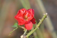 花,Beautiy颜色在乡下,法国 库存照片