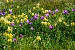 花 使通配现虹彩 罕见的领域花在红色书列出了 库存图片