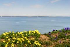 花 使通配现虹彩 罕见的领域花在红色书列出了 免版税库存照片
