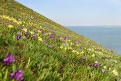 花 使通配现虹彩 罕见的领域花在红色书列出了 库存照片