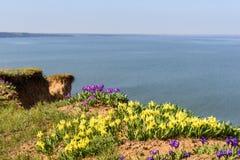 花 使通配现虹彩 罕见的领域花在红色书列出了 免版税图库摄影