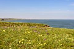 花 使通配现虹彩 罕见的领域花在红色书列出了 免版税库存图片