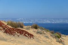 花/在沙丘的植物群:含沙沙丘倾斜的落后的冰厂 免版税库存图片