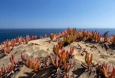 花/在沙丘的植物群:含沙沙丘倾斜的落后的冰厂 库存照片