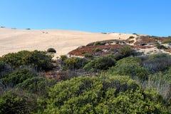花/在沙丘的植物群:含沙沙丘倾斜的落后的冰厂 免版税库存照片