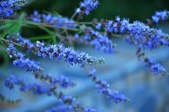 花(在萨莫斯岛海岛上的植被) 库存图片