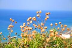 花(在萨莫斯岛海岛上的植被) 库存照片