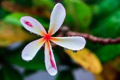 花(在雨以后) 免版税图库摄影