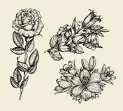 花 手拉的剪影花响铃,上升了,百合,花卉样式 也corel凹道例证向量 库存照片