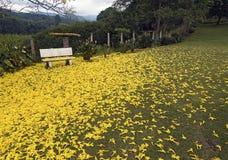 花围拢的偏僻的长凳 免版税库存照片