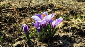 花绽放在春天。时间间隔 股票录像
