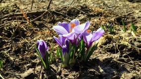 花绽放在春天。时间间隔 股票视频