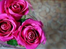 花 玫瑰三 库存图片