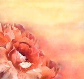 花(玫瑰)在柔和的淡色彩 库存图片