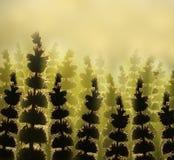 花 背景细部图花卉向量 森林在清洁在阳光下开花在日落在一个夏日 免版税库存照片