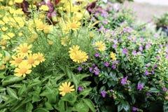 花黄色和紫色 图库摄影