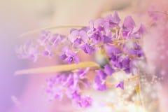 花紫色的一点 库存照片