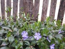 花紫色的一点 库存图片