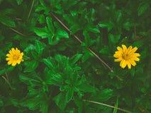 花黄色美丽的绿草 免版税库存图片