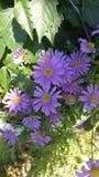 花紫色美好的夏天 库存照片