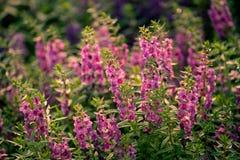 花 花的温暖的口气图象 库存照片