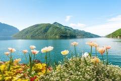 花临近有天鹅的湖,卢加诺,瑞士 库存照片