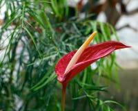 花fredrick庭院meijer显耀热带 免版税图库摄影