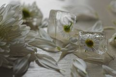花inice立方体 库存照片