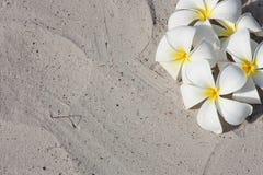 花leelawadee沙子白色 库存图片