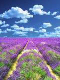 芳香域草本横向淡紫色工厂 当代油画 免版税库存照片