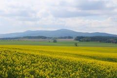 芸苔napus的领域与小山和天空的 捷克横向 免版税库存图片