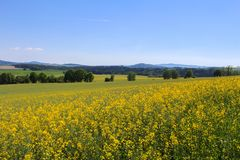 芸苔napus的领域与树和天空的 捷克横向 免版税库存照片