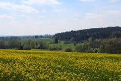 芸苔napus的领域与森林和天空的 捷克横向 库存照片